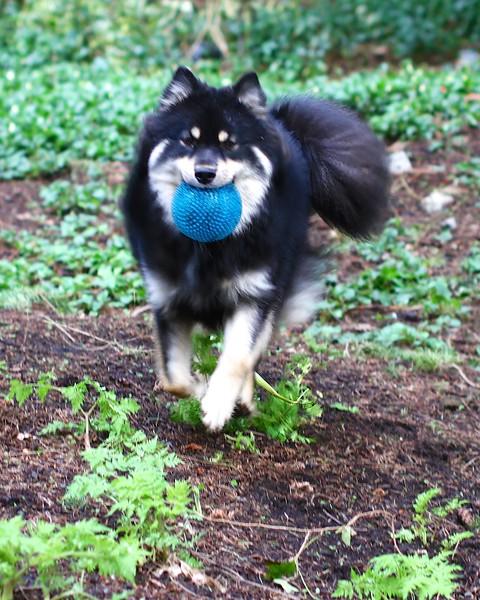 I LOVE MY BALL I LOVE MY BALL I LOVE MY BALL   March 21, 2013
