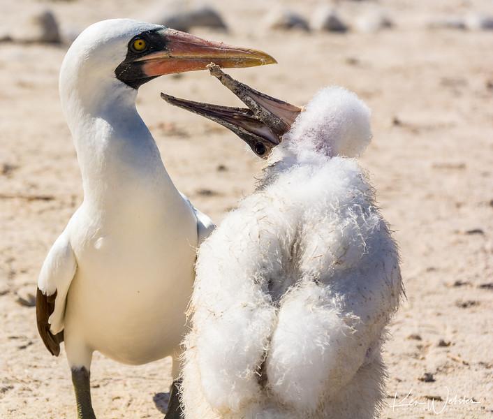 2018 Darwin's Bay Beach-32.jpg