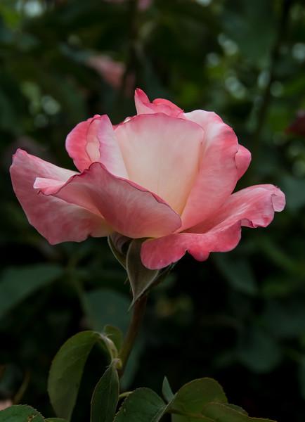 Balboa Park Flowers-1144.jpg