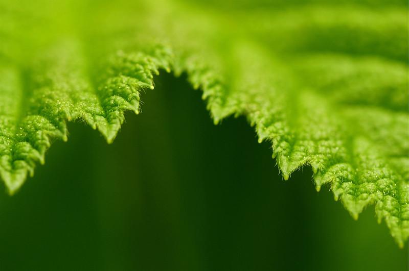 Leaf Edge.jpg