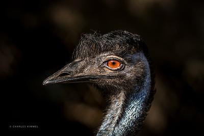 Emu: 2020