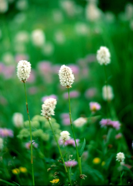 amh FLOWERS (1210).jpg