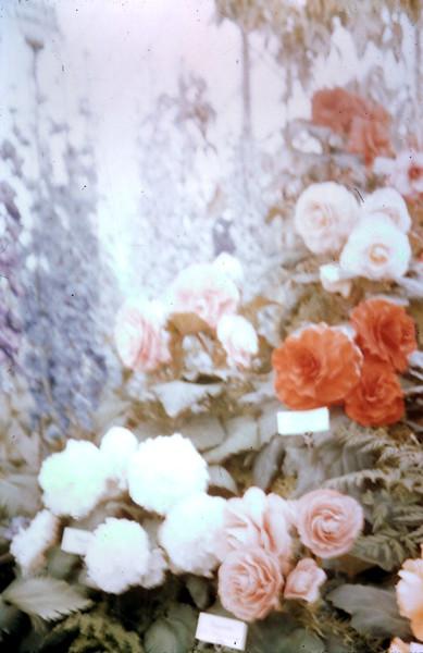 1959-5-29 (22) Chelsea flower show.JPG
