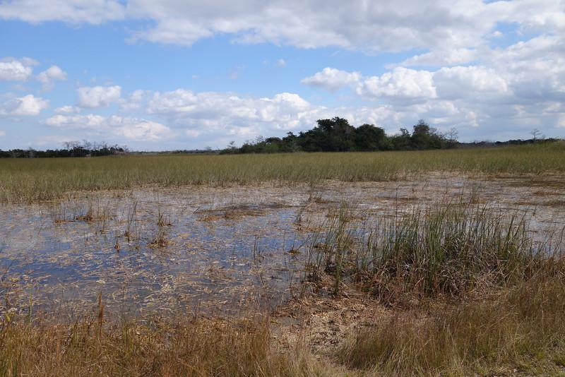 Everglades NP - 23.jpg