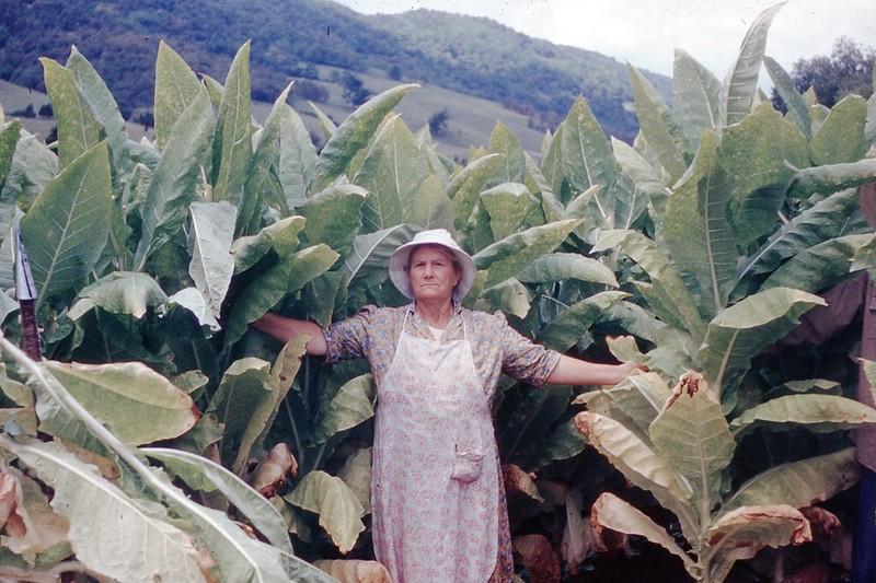 1954 - Mrs. Gilbert Topping Tobacco.jpg