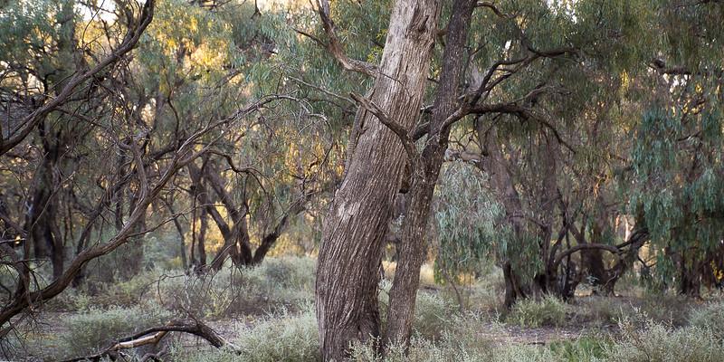 Nikolajsen-Gribdagen-Australia-29.jpg