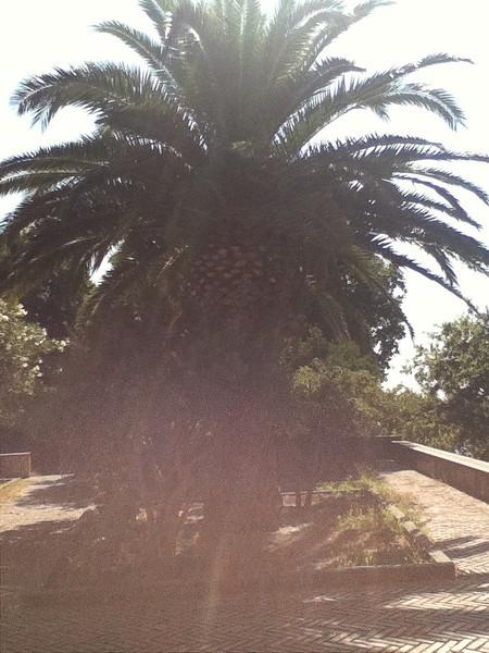 20110820-Ginka-Sicily-20110820--IMG_1549--0750.jpg