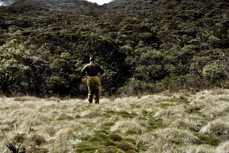 Greensword Bog, upper level, 7 years after fencing; standing: Betsy H. Gagné 09 March 1988 (photoID: bhg002038)