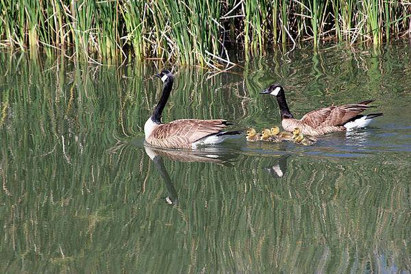 2005 and 2010. Bay Area marshlands: Mountain View, Sunnyvale, Drawbridge