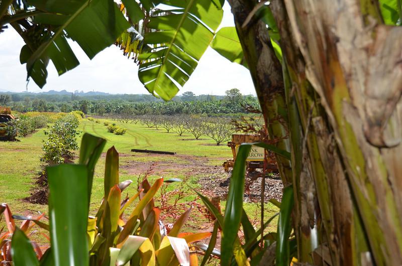 Oahu Hawaii 2011 - 90.jpg