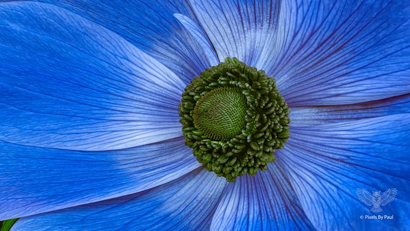 00065 Blue Acorn 16x9.jpg
