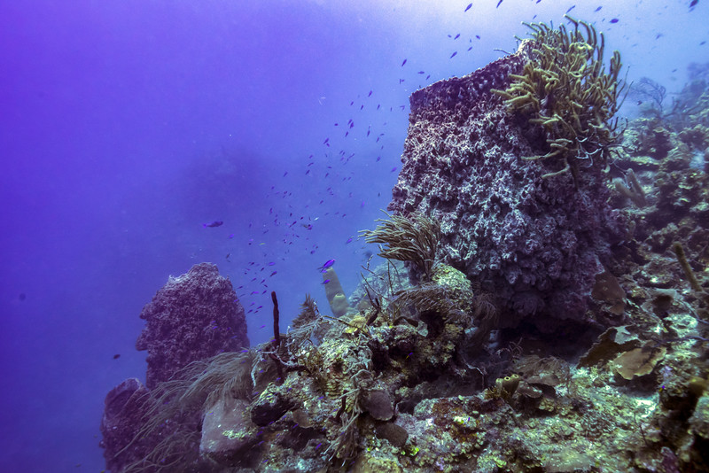 Coral reefs underwater, Tarpon Cayes, Belize Barrier Reef, Lighthouse Reef, Belize