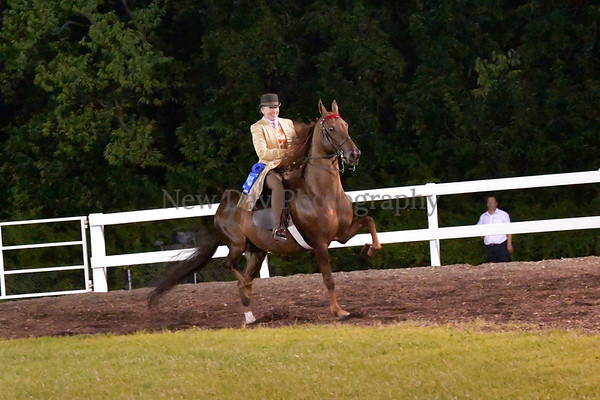 67. $200 ASB 3-Gaited Show Pleasure Stake