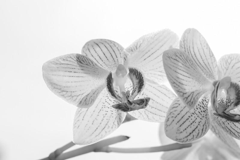 FineArt_Flowers_051520_0489.jpg