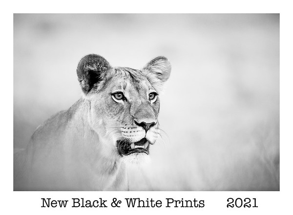 New B&W Prints 2021