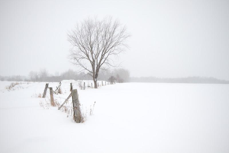Fence and tree field Creek Road Sax-Zim Bog MN IMG_8041.jpg