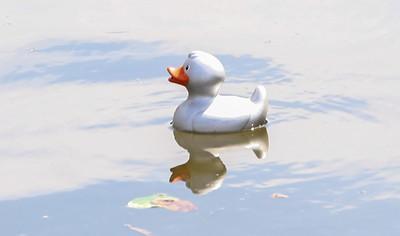 2019 Bay Head Duck Derby - Rubber Duck Race