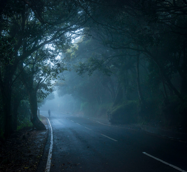 foggy day around ooty 2.jpg