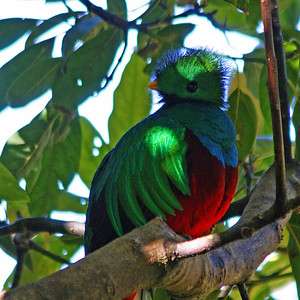 8x12 inches VERTICAL  (7 Birds)