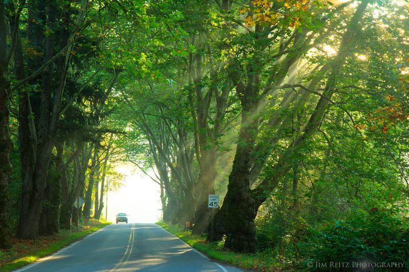 Sunbeams & sycamores, near Snoqualmie