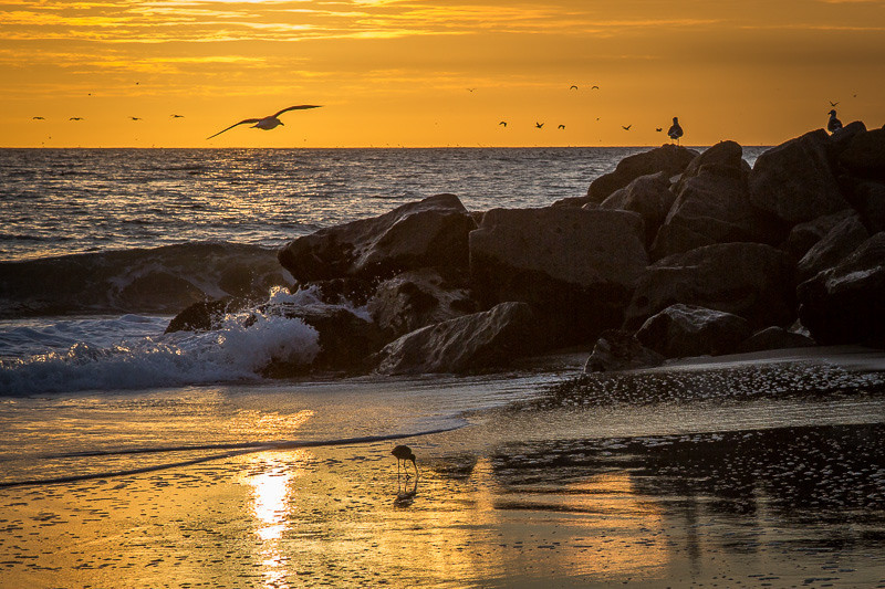 February 4 - Birds at sunset.jpg