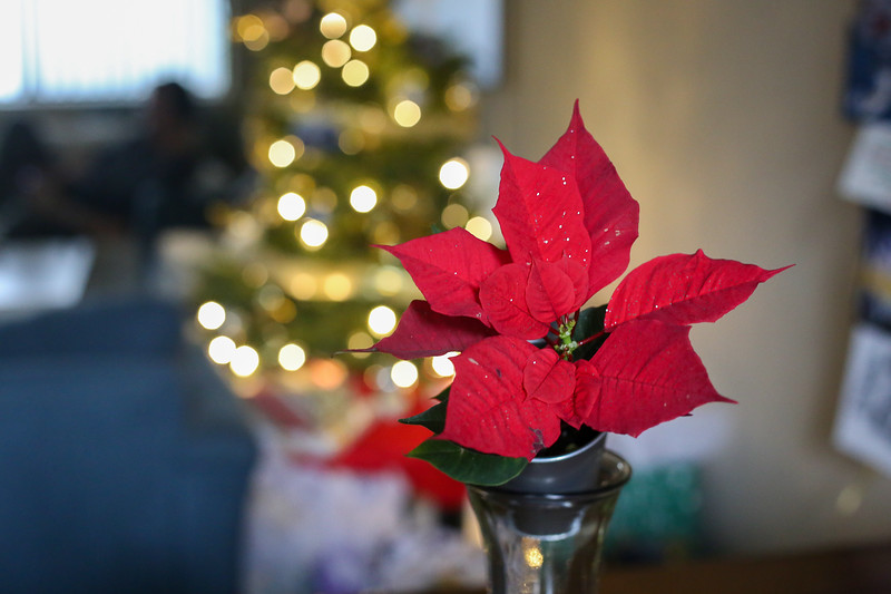 2019-12-22_ChristmasDecor-4406.jpg