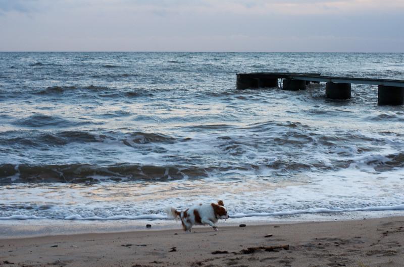 Svante On The Beach