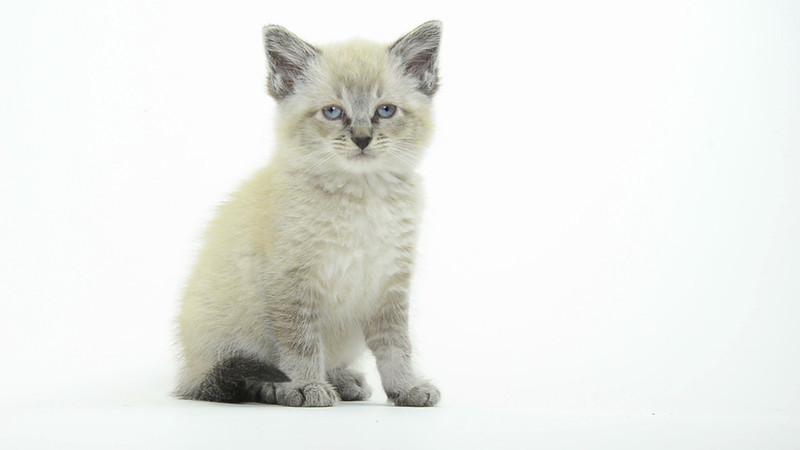 Kitten_05_IS_HD.mov