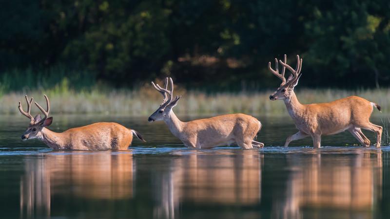 American River Ponds 7-26-16-4413.jpg