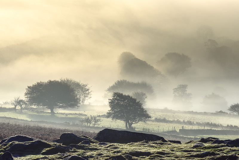 1146_Dartmoor.jpg