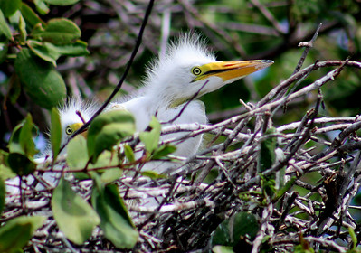 BIRDS - Juan Venado