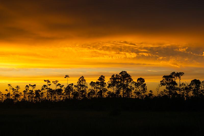 Everglades (3 of 60).jpg