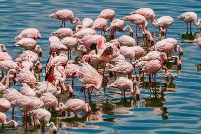 Arusha National Park - Tanzania