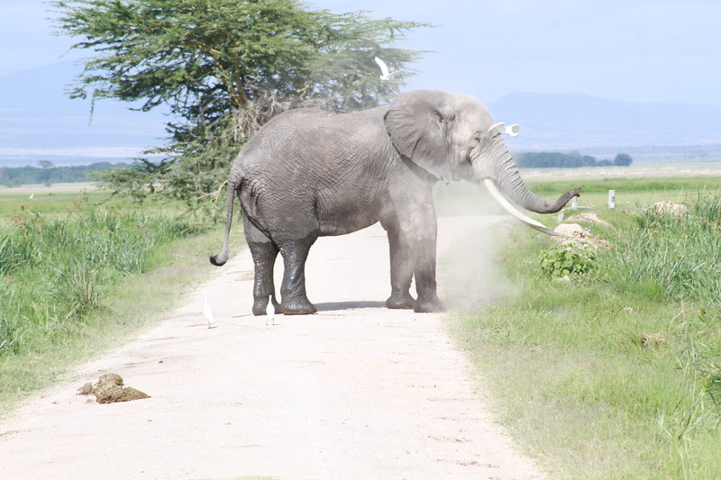 Kenya 2019 #2 875.JPG