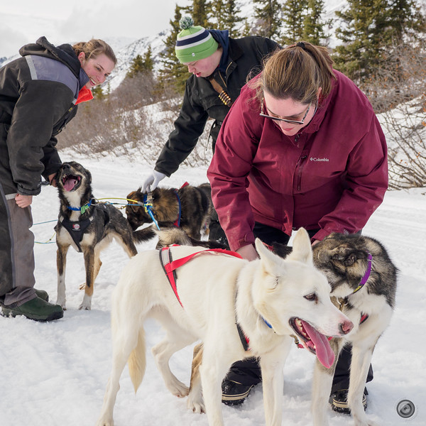 20190325_Blaire_and_Liz_Mushing_64.jpg