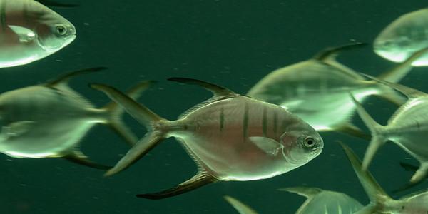 2017 12 30 Atlanta Georgia Aquarium