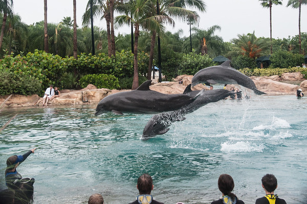 * Discovery Cove - Dolphin Lagoon