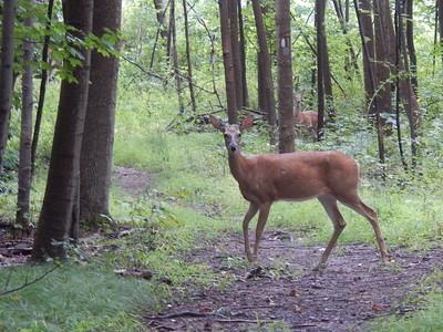 Oh Deer !!!