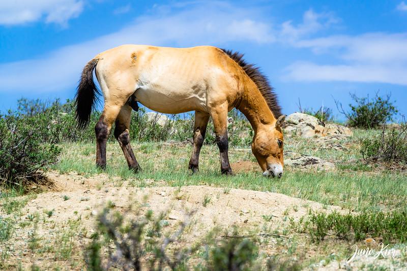 Kustei National Park__6109537-Juno Kim.jpg