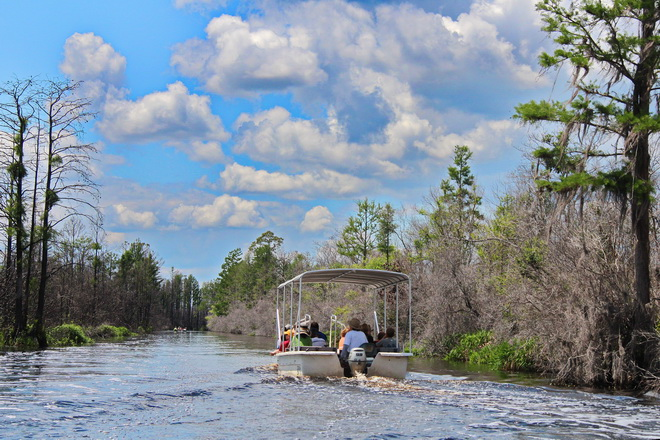 Okefenokee swamp tours include a guided boat ride.