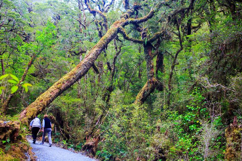 Milford Road Rain Forest
