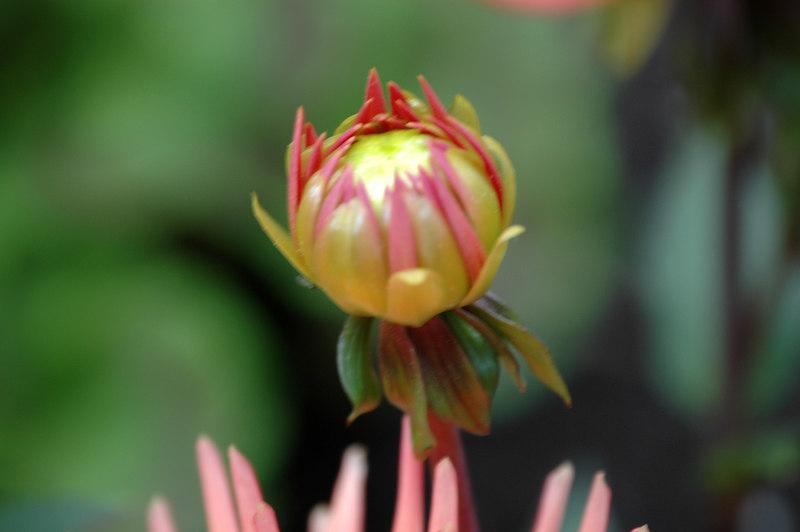 06_Flower_0016.JPG