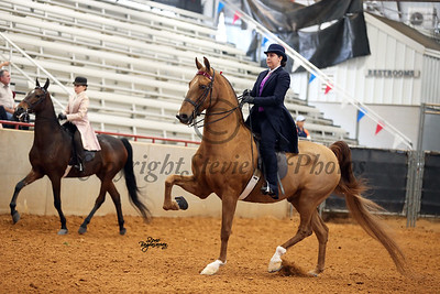 13. Open English Pleasure ( Saddle or Hunt Seat) (Any Breed)