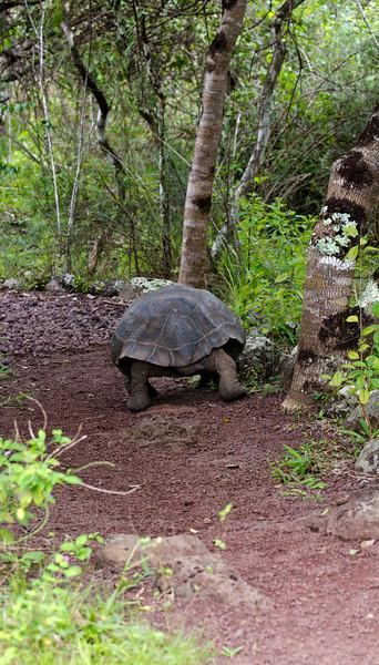Galapagos-86.jpg