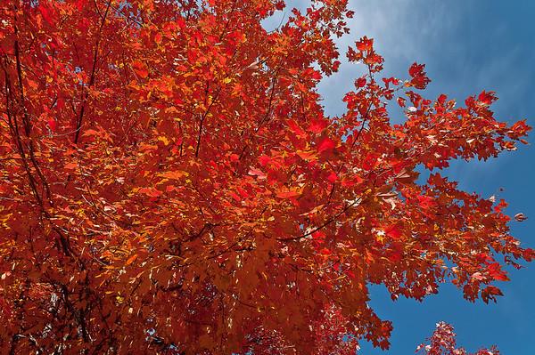 Fall Foliage 2011