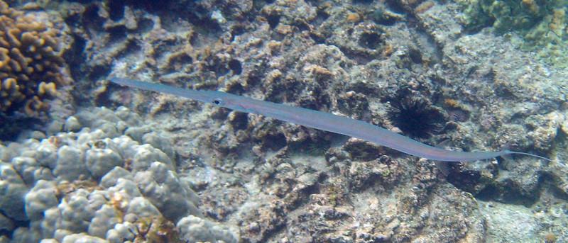 508- 20080416- Hawaii 20-Snorkelling IMG_0760.jpg