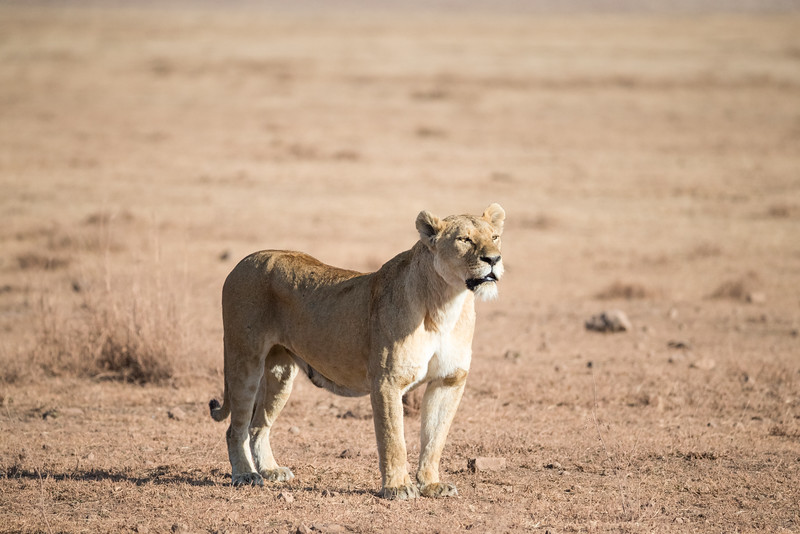 Africa - 101816 - 6899.jpg