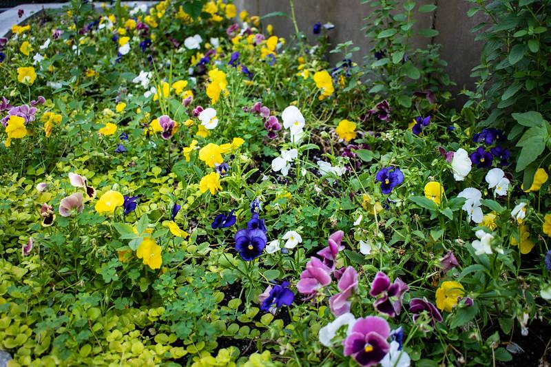 07_02_2019_Campus_Flowers_DSC_0123.jpg