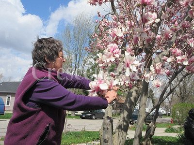 04-21-15 NEWS TRee in bloom