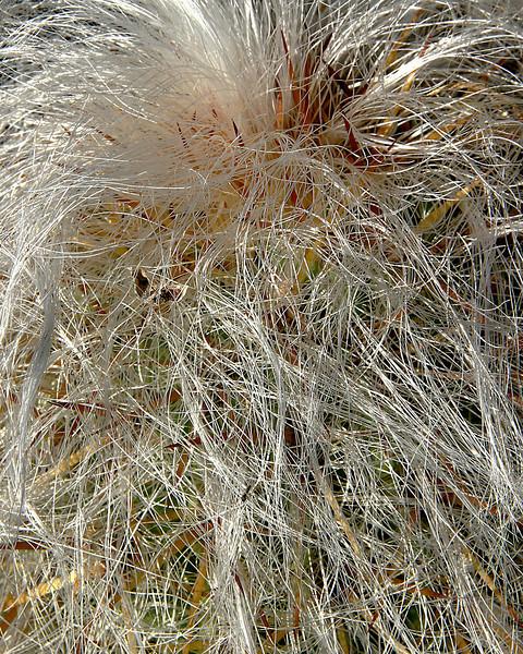 Cactus Hair.jpg